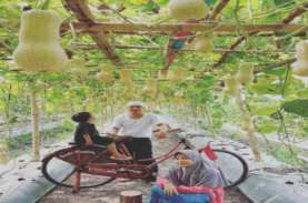 Pemuda Karang Taruna Teluknaga Tangerang Budi Daya Melon dan Labu Madu