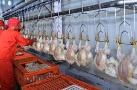 Pemerintah Pangkas Bibit Ayam Pedaging, CPIN & JPFA…