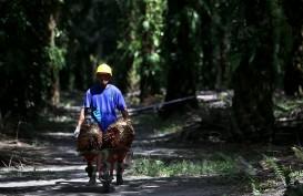 Masuk Pertengahan Tahun, Dana Peremajaan Sawit di Sumut Belum Terealisasi