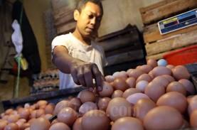 Harga Telur Ayam di Sumut Anjlok karena Stok Melimpah