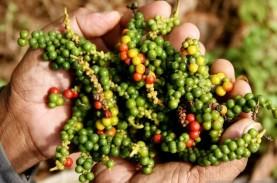 Ratusan Petani Lada di Lampung Dilatih Genjot Produksi