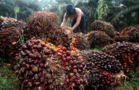 Terus Melemah, Kini Harga Sawit Riau Rp2.054,59 per Kg
