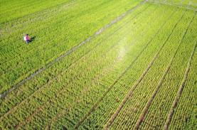 Lima Koridor Jalur Pertanian Dibangun di Kabupaten…