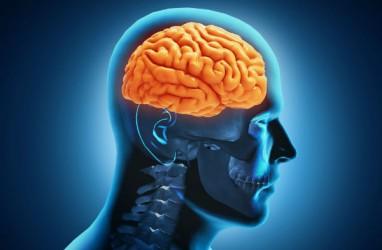 4 Suplemen Terbaik untuk Asupan Otak