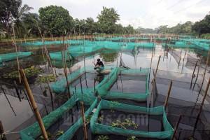 KKP Usulkan Tambahan Anggaran Belanja 2022 Senilai RP8,043 Triliun Untuk Budidaya Ikan