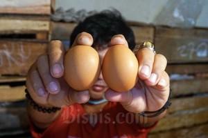 Suplai Telur Ayam Dari Perusahaan Besar Saat Pendemi Rugikan Peternak Kecil