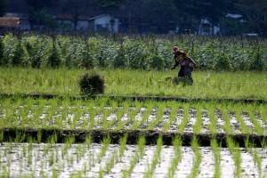 Pemerintah Catat Kesejahteraan Petani di Indonesia Masih Kurang