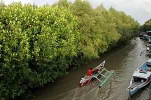 Presiden Joko Widodo Targetkan Rehabilitasi Lahan Mangrove Mencapai 34 Ribu Hektare Pada 2021