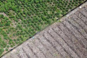 Alih Fungsi Kawasan Konservasi Suaka Margasatwa Menjadi Perkebunan Kelapa Sawit di Aceh